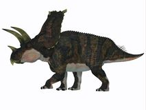 Perfil del lado del dinosaurio de Bravoceratops Fotos de archivo