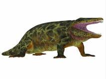 Perfil del lado del dinosaurio de Eryops Imagen de archivo libre de regalías
