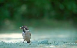 Perfil del pájaro Imagenes de archivo