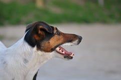 Perfil del perro Imagen de archivo