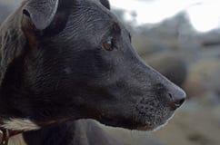 Perfil del perro Imagenes de archivo