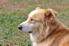 Perfil del perro Fotografía de archivo