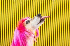 Perfil del perro con la lengua Visión desde el lado Peluca divertida rosada y fondo amarillo y negro rayado imagen de archivo libre de regalías