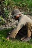 Perfil del trabajador de campo del arroz que cosecha el arroz en Asia sudoriental Foto de archivo