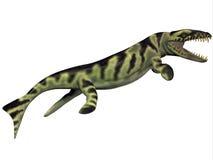 Perfil do Dakosaurus Foto de Stock Royalty Free
