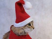 Perfil do gato do Natal Fotos de Stock