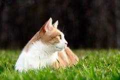 Perfil do gato na grama Imagens de Stock