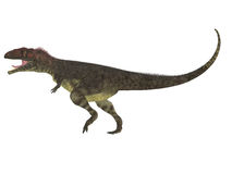 Perfil do lado de Mapusaurus Foto de Stock