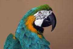 Perfil do papagaio Foto de Stock Royalty Free