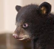 Perfil do urso preto do bebê imagens de stock