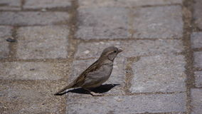 Perfil dos pássaros Fotografia de Stock Royalty Free