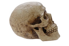 Perfil humano do crânio Fotografia de Stock Royalty Free