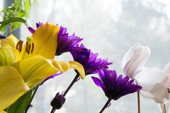 Perfil lateral das flores sortidos Fotos de Stock