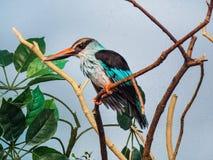 Perfil lateral de um martinho pescatore foto de stock royalty free
