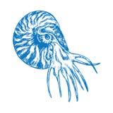 Perfil que nada del nautilus, bosquejo exhausto del garabato de la mano stock de ilustración
