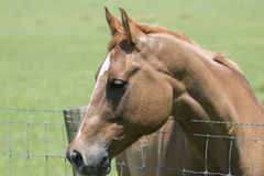 Perfil rubio del caballo fotografía de archivo libre de regalías