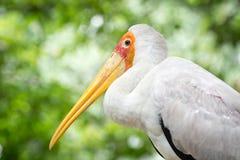 Perfil sério do pássaro Fotografia de Stock
