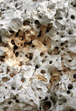 Perforated Rock. Close-up background of a naturally perforated rock Stock Image