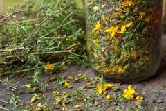 Perforatum de Hypericum photos libres de droits