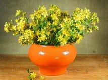 Perforatum Hypericum 1 ζωή ακόμα Ανθοδέσμη των λουλουδιών λιβαδιών Στοκ Φωτογραφίες