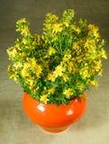 Perforatum Hypericum 1 ζωή ακόμα Ανθοδέσμη των λουλουδιών λιβαδιών Στοκ φωτογραφίες με δικαίωμα ελεύθερης χρήσης