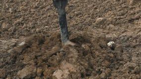 Perforazione del foro del trattore nel suolo video d archivio