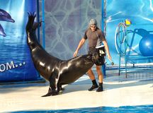 Yalta. Crimean peninsula. Show with a sea lion. royalty free stock images
