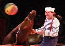 Performance of seals. Spectacle of the circus Medrano Stock Photography