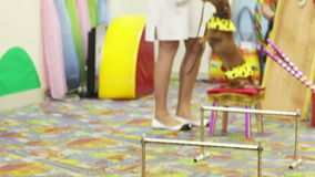Performances dogs. Well-dressed dog stand on children's birthday party stock video