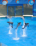 Performing Dolphin. And Trainer in the hongkong ocean park Stock Photo