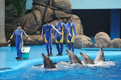 Performing Dolphin Royalty Free Stock Photo
