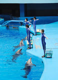 Performing Dolphin and Trainer Royalty Free Stock Image