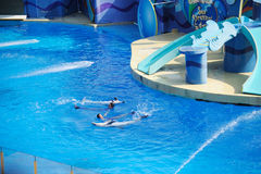 Performing Dolphin and Trainer. In the hongkong ocean park stock photos