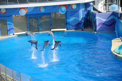 Performing Dolphin and Trainer Stock Photos