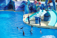 Performing Dolphin and Trainer Royalty Free Stock Photography