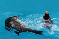 Performing With Sea Lion - EDITORIAL USE Stock Images