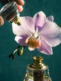 Perfume árabe da elite em uma garrafa de cristal Óleo de Oud do Attar imagens de stock royalty free