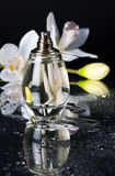 Perfume Royalty Free Stock Photo