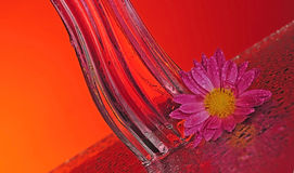 Perfume bottle with a flower. A bottle of perfume with a flower on a table with splashes. The background is orange Stock Photography