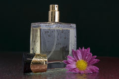 Perfume bottle with a flower. A bottle of perfume with a flower on its left side. The table, flower and perfume have small little watter splashes Stock Image