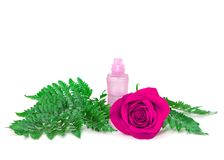 Perfume bottle with fresh purple rose and fern leaves Royalty Free Stock Images