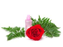 Perfume bottle with natural red rose and fern leaves Royalty Free Stock Images
