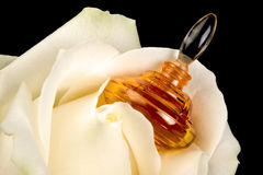 Perfume bottle in a rose Stock Photography