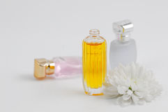 Perfume and chrysanthemums. Beautiful perfume bottles and fresh daisy Royalty Free Stock Photography