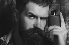 Perfume or cologne bottle man with beard on serious face. Perfume or cologne bottle bearded man or brutal caucasian hipster with long beard and moustache on royalty free stock photos