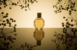 Perfume. Flacon of perfume with reflection on a beige background Royalty Free Stock Image