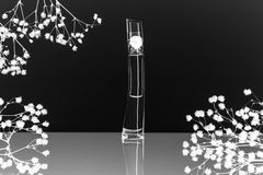 Perfume. Flacon of perfume with reflection in black and white colors Royalty Free Stock Photos