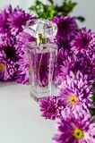 Perfume with floral scent. Perfume bottle and pink chrysanthemums on a white background royalty free stock photography