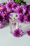 Perfume with floral scent. Perfume bottle and pink chrysanthemums on a white background royalty free stock photo