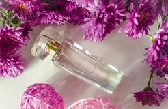 Perfume with floral scent. Perfume bottle and pink chrysanthemums on a white background royalty free stock photos